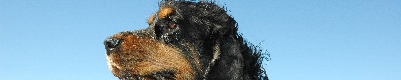 Suss Creations – Hundkunskap